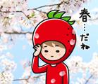 ichigoboy_sakura_s
